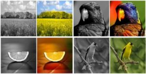 Vivid Color Pictures From Black-and-White Photos
